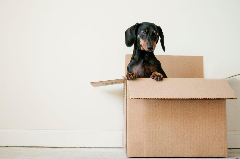 um cachorro em uma caixa